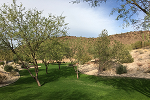 Southwest Grounds desert edge (image)