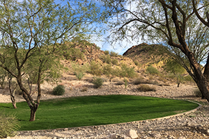 Southwest Grounds mesquite tree shade (image)