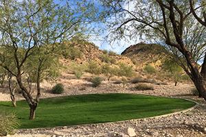 Southwest Grounds mesquite tree shade (image)