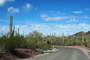 Southwest Grounds Sonoran Desert road (image)